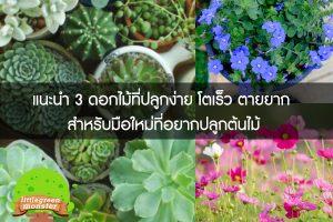 แนะนำ 3 ดอกไม้ที่ปลูกง่าย โตเร็ว ตายยาก สำหรับมือใหม่ที่อยากปลูกต้นไม้