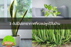 3 ต้นไม้ฟอกอากาศที่ควรปลูกไว้ในบ้าน