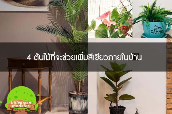 4 ต้นไม้ที่จะช่วยเพิ่มสีเขียวภายในบ้าน