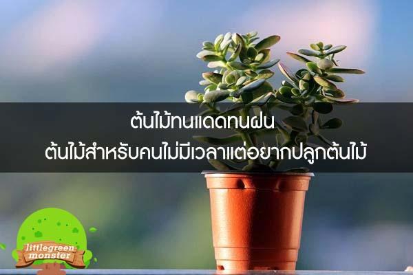 ต้นไม้ทนแดดทนฝน ต้นไม้สำหรับคนไม่มีเวลาแต่อยากปลูกต้นไม้