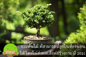 รวมต้นไม้ ที่สามารถปลูกในห้องนอนได้ โดยไม่ส่งผลเสียต่อร่างกาย ปี 2021