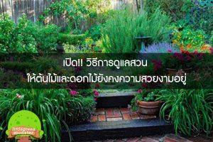 เปิด!! วิธีการดูแลสวน ให้ต้นไม้และดอกไม้ยังคงความสวยงามอยู่
