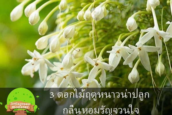 3 ดอกไม้ฤดูหนาวน่าปลูก กลิ่นหอมรัญจวนใจ